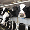DairyResearchCluster