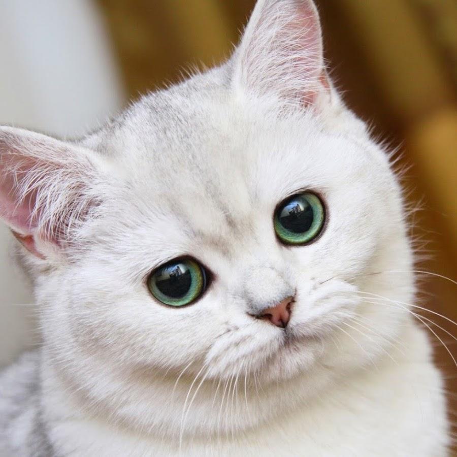 Αστεία γάτα