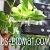 Ultrasounds BioMat
