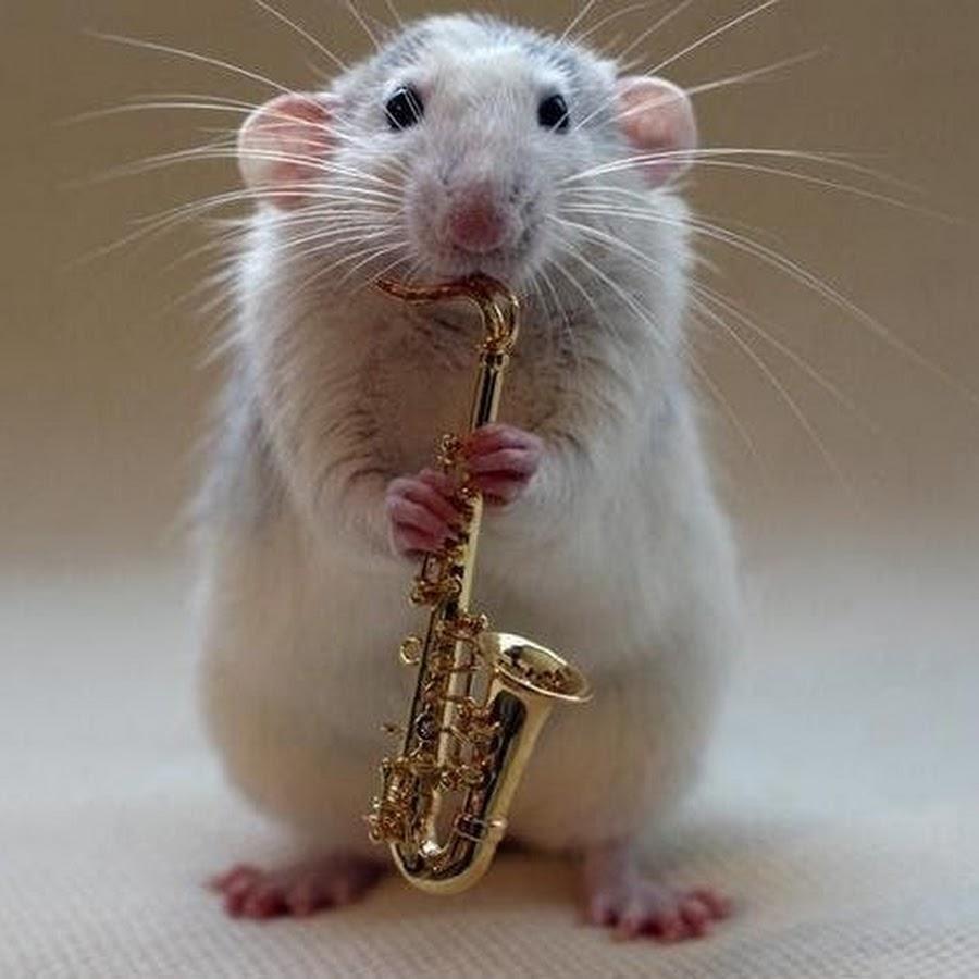 Узбекском языке, смешная мышь картинка
