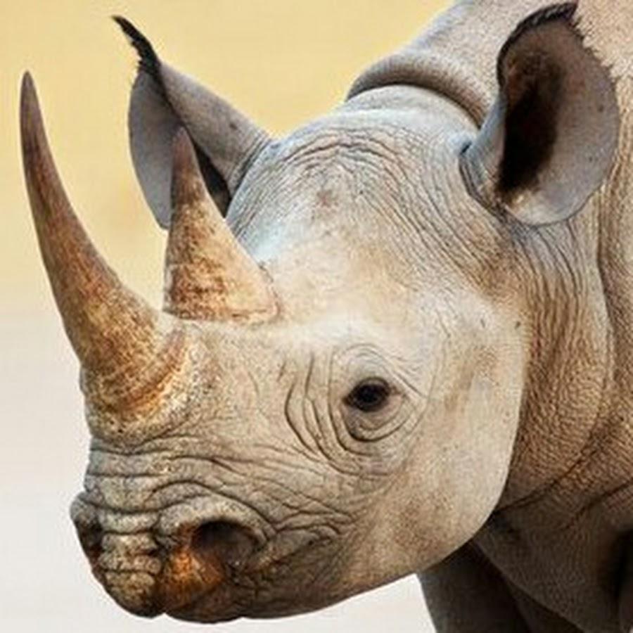 Картинки носорога с двумя рогами