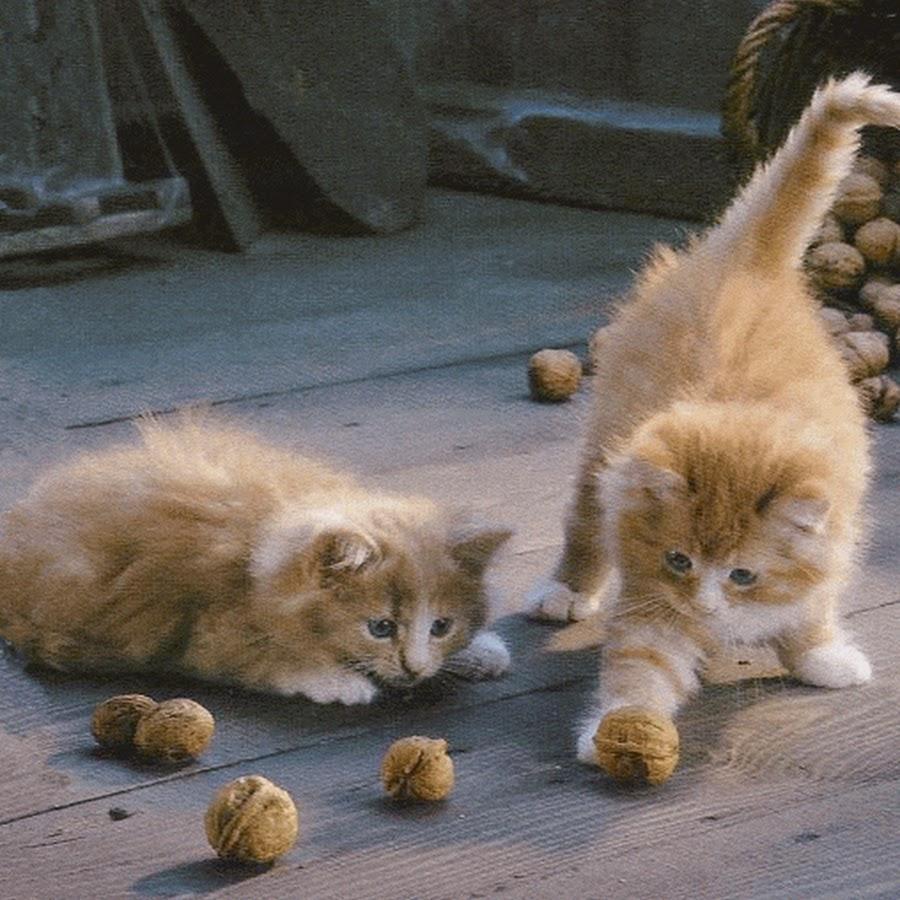 Картинки анимации котенок, именем лена днем