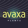 Avaxa Plants
