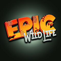Epic Wildlife Net Worth