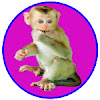 Monkey Midi