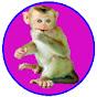 Monkey POPO