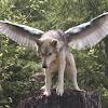 FeatherWolf