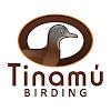 Tinamu Birding