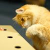 猫もぐらたたき実行委員会