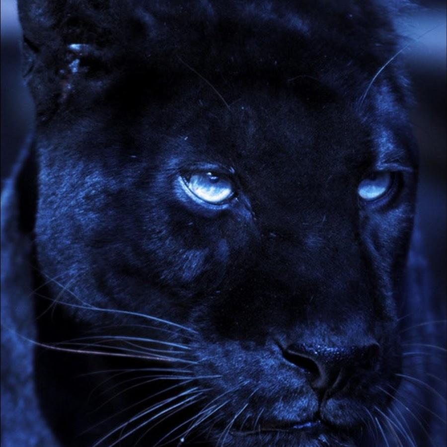 Надписью, картинки на телефон красивые и крутые пантера
