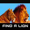 Find a Lion