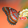 Shan's zone