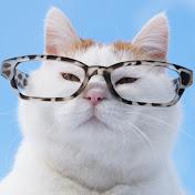 無料テレビでかご猫 Blogを視聴する