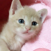 無料テレビでひのき猫を視聴する