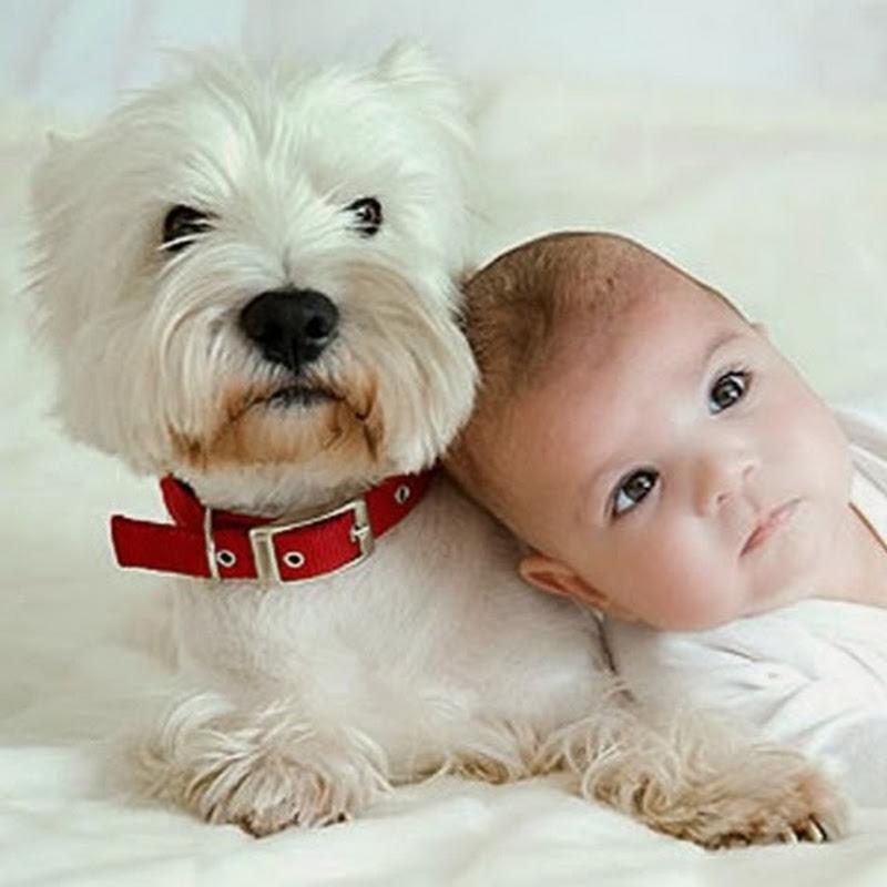 Dog Loves Baby