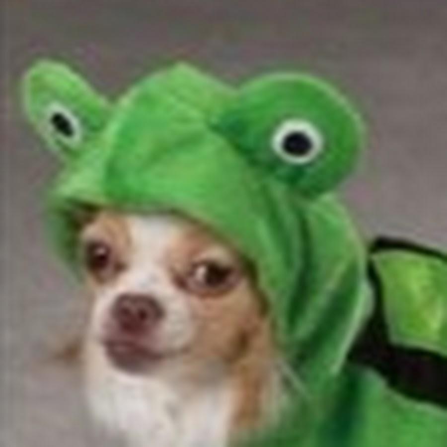 froggo doggo - YouTube