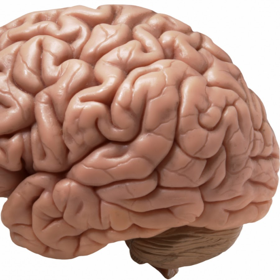 вообще картинка с мозгами и надписью мозги храбро