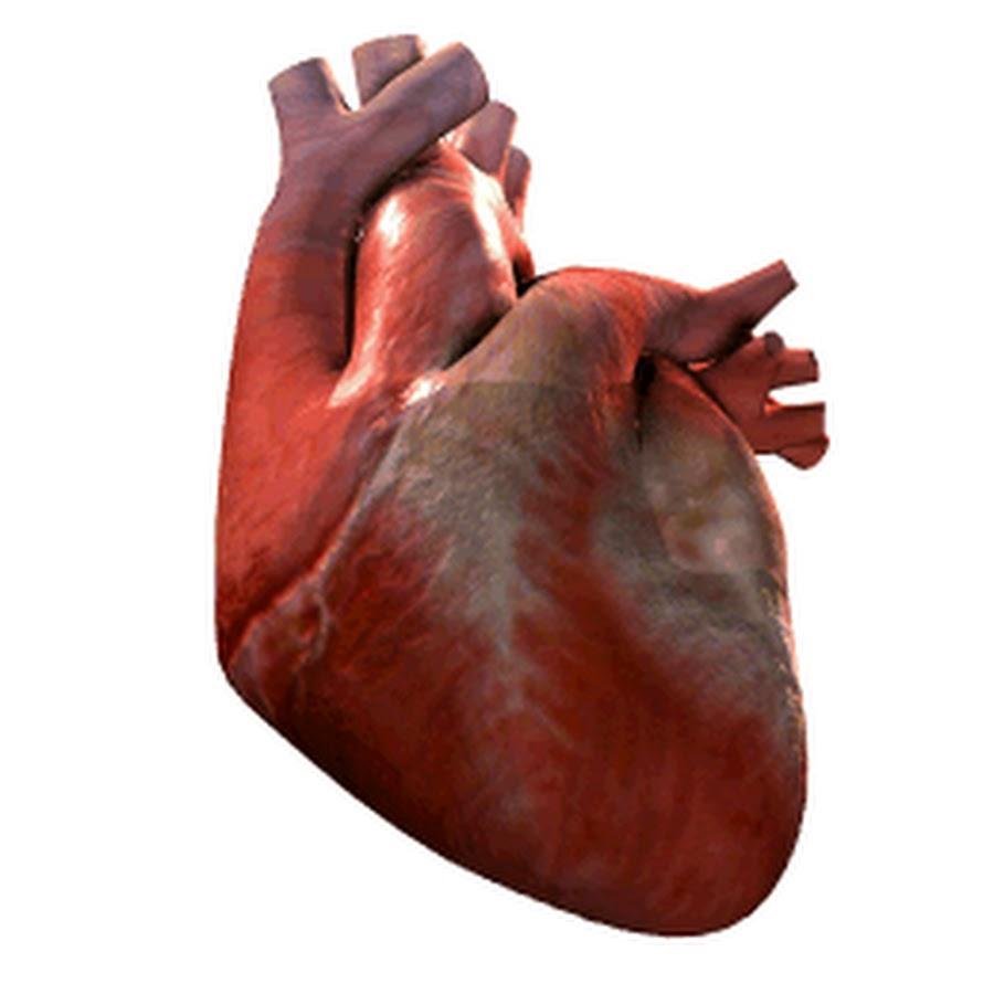 Анимация бьющееся сердце человека, танке