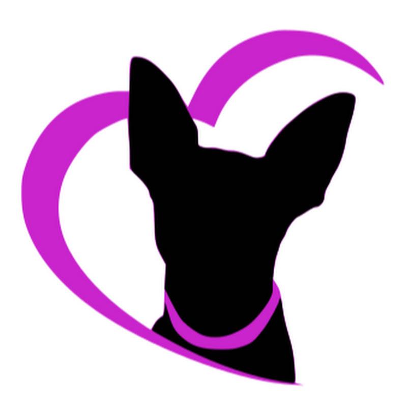 Perros Amados (perros-amados)