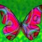butterfly0277