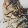 My cat Khaleesi
