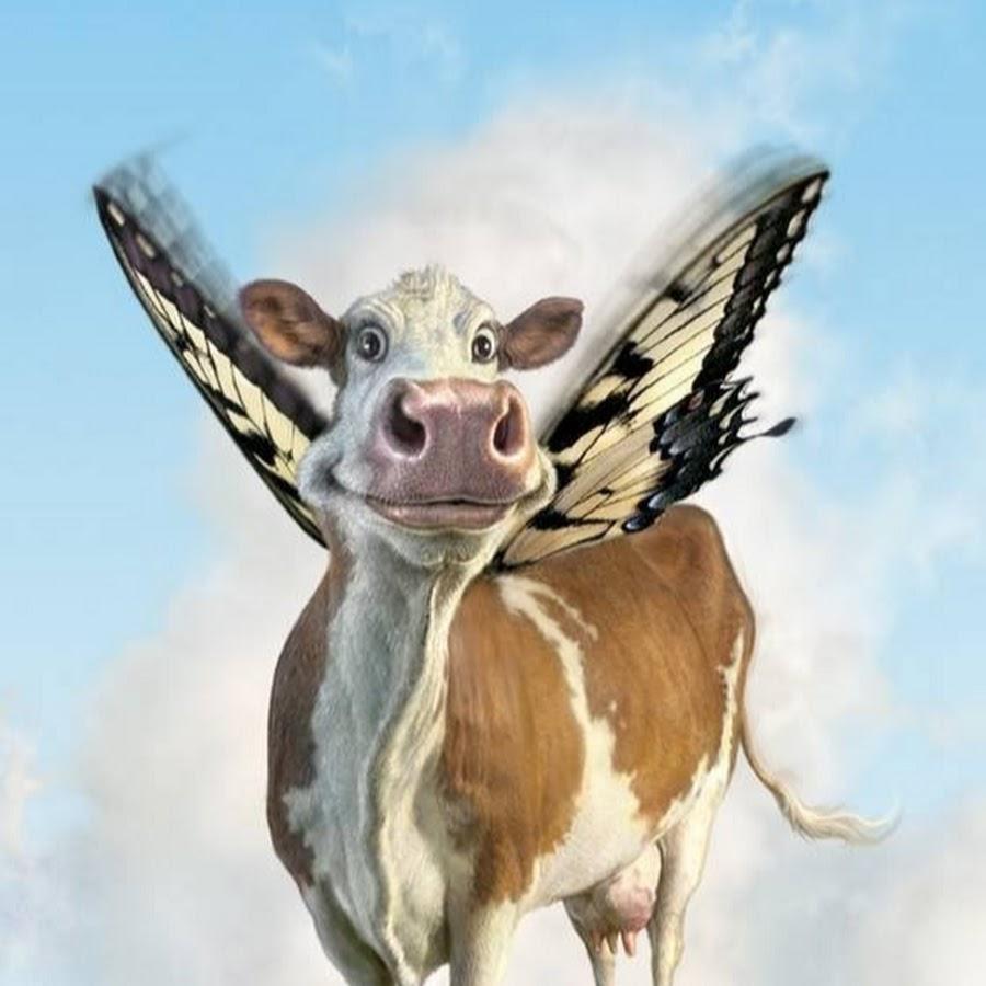 Открытки с коровами, букин