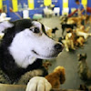 Ohana Doggie Day Care & Spa