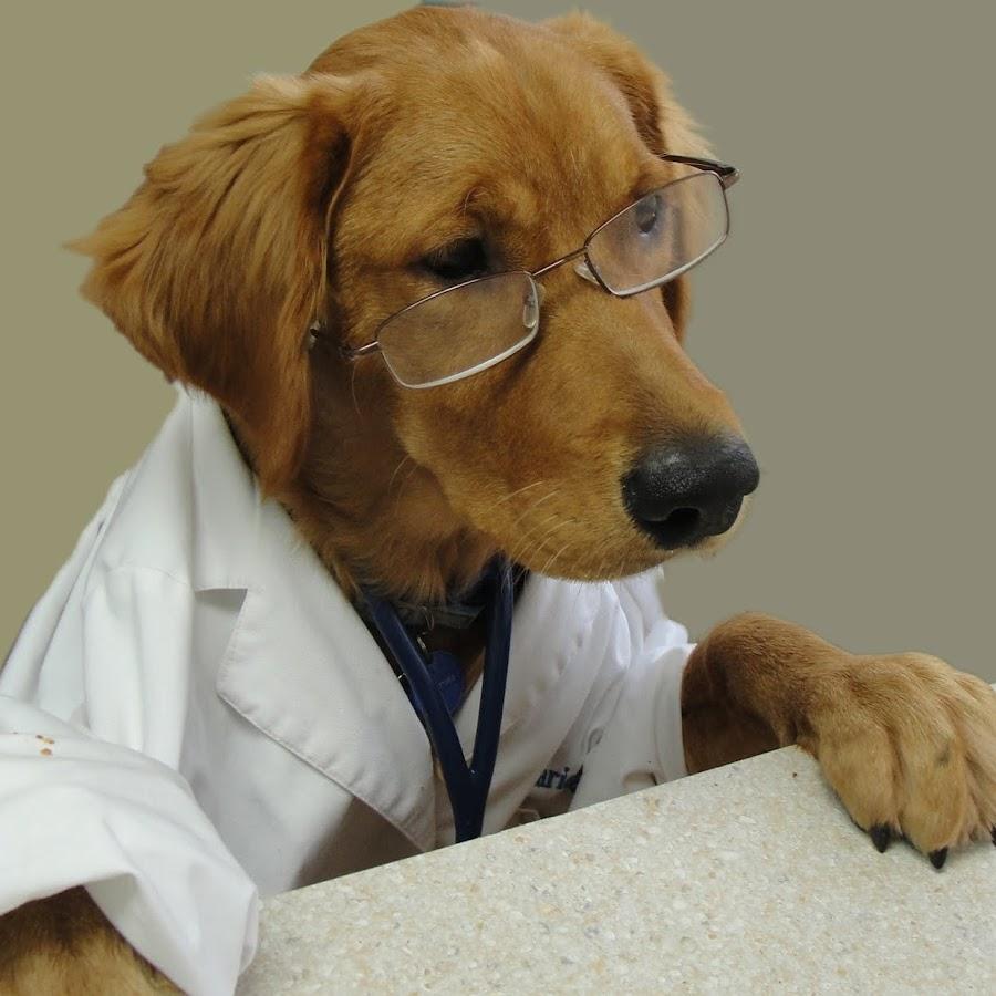 Рождением, прикольные картинки врачей животных