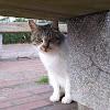 Impressed cat video