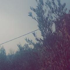 خادم القرآن الكريم Net Worth