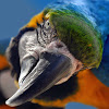 Papagei Magazin
