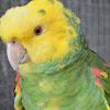 Royal Bird Company