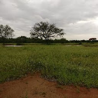 Sri Charan
