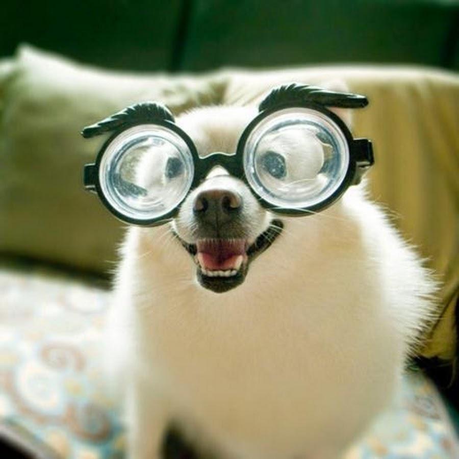 Открытки, картинки приколы в очках