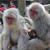 Snow Monkey Town Yamanouchi