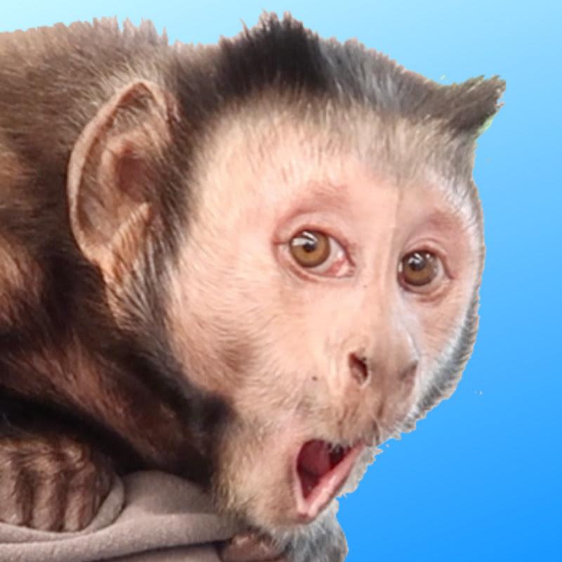 monkeyboochannel