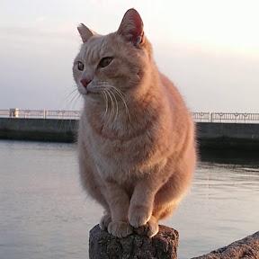 野郎が撮った猫動画(YouTuber:野郎が撮った猫動画)