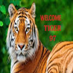 TIGER 97