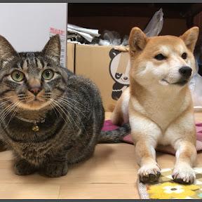 Shiba inu&Cat Channel柴犬ハナ&猫クロ YouTuber