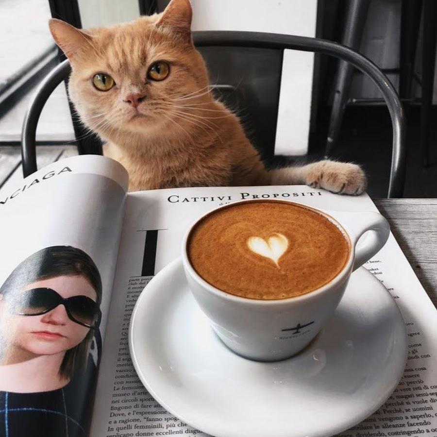 употреблять доброе утро с кофе и котиком картинки терпеливый профессиональный фотограф