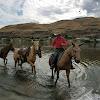 diamond b horses and mules. bostrom