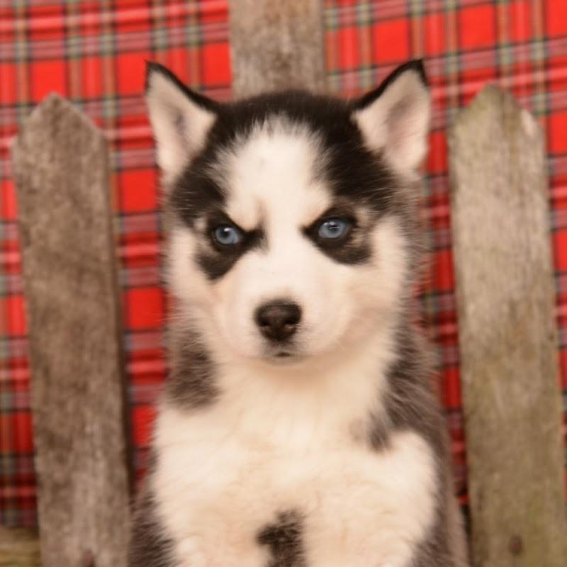 Mt Hope Puppies
