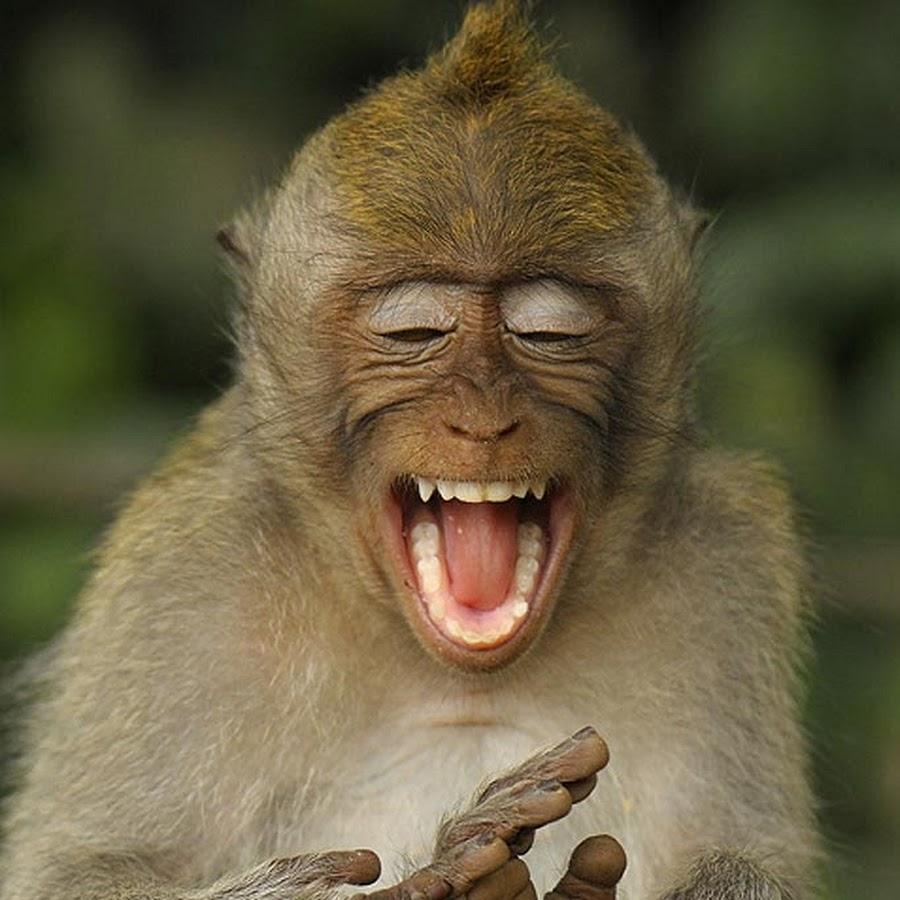Смех картинки прикольные смешные, татьяна татьянин день