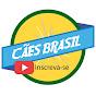 Bora Brasil (bora-brasil)