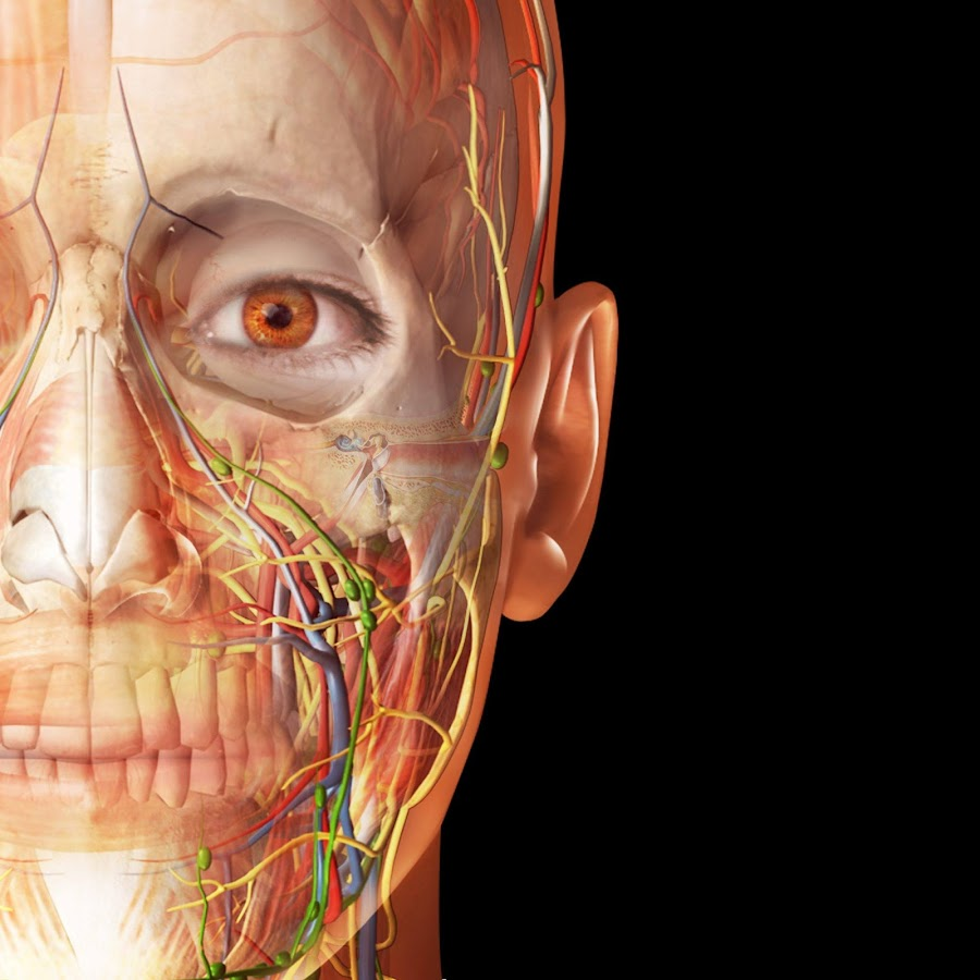 Visible Body - YouTube