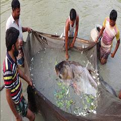 fishmarketbd Net Worth