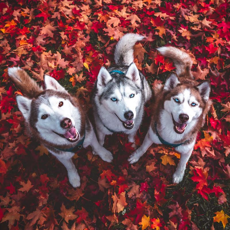 Husky Squad