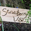 Strawberry Vibe