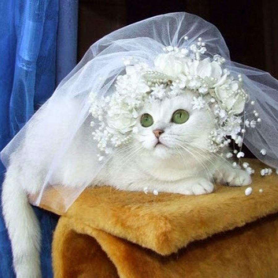 Картинки кошки в свадебных платьях