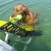 WaterDog Adventure Gear™
